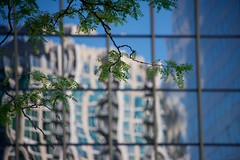 Nature Before Geometry (The Good Brat) Tags: colorado us denver nature geometry reflection tree branch leaves lines building abstract urban boxes squares pattern blue green buildings city centralbusinessdistrict
