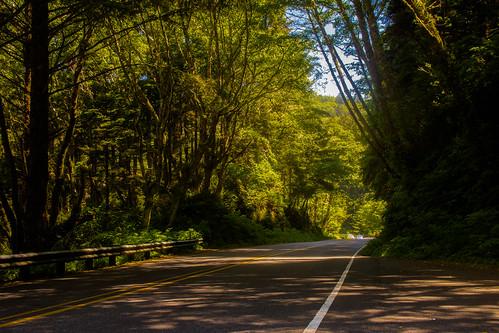 Highway 101, Oregon Pacific Coast, OR