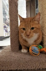 Squishy - 2 year old neutered male