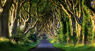 The Dark Hedges, Ireland