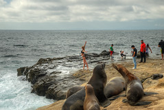 Seal Ballet 2017.08.04.16.22.05 (Jeff®) Tags: jeff® j3ffr3y copyright©byjeffreytaipale california sandiego lajolla seals wildlife animalplanet animal pacific ocean water surf waves rocks shoreline outside outdoors people pose beach clouds ngc