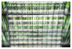 I want to break free (leo.roos) Tags: fence fencing hek hekwerk schutting green groen patterns squares grid rooster hummellondonkinematographprojectionlens1½inches115 a7rii hummel3815 mfh projectorlens projectionlens darosa leoroos