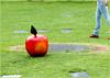 Fallobst (sinepo) Tags: park wiese apfel rot bblatt bein