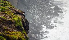 leap of faith - better in fullscreen (Smo_Q) Tags: dyrhólaey iceland coast ocean cliff puffin rain mist clouds pentaxk3ii