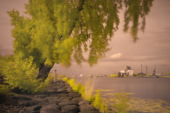 IR Experiments & fisherman (MarxschisM) Tags: latvia riga river daugava ir filter bw conversion fisherman fishing port tree xt1 samyang21 ir760
