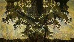 Tree Silhouette (Stephenie DeKouadio) Tags: canon art artistic artwork abstract abstractart abstractpainting painting silhouette hypnotique texture