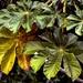 Folhas+%2F+Leaves