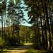 In the Pines Kingussie. (Fr Paul Hackett) Tags: pines kingussie sunshine path mountain serene