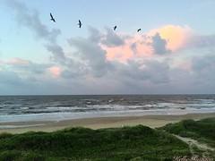 Morning Sunrise (auntiekelliephotography) Tags: paradise beautiful waves sunrise nature gulfofmexico pelicans ocean beach sand white texas crystal