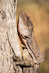 Frill Necked Lizard (Nature's Image Photography) Tags: frillneckedlizard frilly reptile australia outback wildlife nature