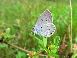 Butterfly 1449