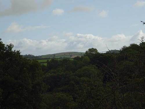 Pure Devon