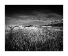 What Remains (Sandra Herber) Tags: infrared manitoba prairies sandersschool