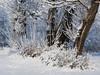 Cerknica Lake (happy.apple) Tags: otok cerknica slovenia si cerkniškojezero cerknicalake slovenija winter morning zima jutro trees