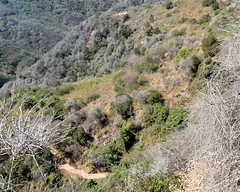 022 The Trail Goes On And On (saschmitz_earthlink_net) Tags: 2017 california topangacanyon statepark losangeles pacificpalisades losangelescounty santamonicamountains hike hiking trail loslionestrail