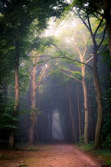 """Entrance to the """"Corversbos"""" Hilversum, the Netherlands"""