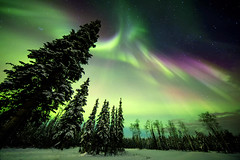 Sleepless in Alaska (yan08865) Tags: sky alaska landscape winter snow trees forest colors fairbanks nature earth pavlis wood travel north pics photographers canon wide ngc abigfave aurora
