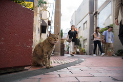 猫 (fumi*23) Tags: ilce7m2 sony 28mm ainikkor28mmf28s street katze gato neko cat nikkor nikon miyazaki fmount animal alley ねこ 猫 ソニー ニコン 街の猫