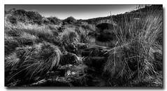 Moorland Stream (jeremy willcocks) Tags: dartmoor devon uk moor stream bridge blackandwhite mono reeds water jeremywillcocks wwwsouthwestscenesmeuk fujixt10 xf1024mm