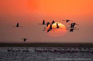 Flamingo Finale