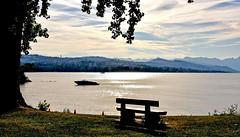Douceur d'un matin d'été (Diegojack) Tags: saintsulpice vaud suisse paysage lumière matin soleilmatinal brillance lac léman banc pastel