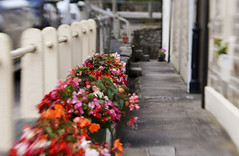 Flower Box Fence (Elisafox22 slowly catching up again!) Tags: elisafox22 sony nex6 lensbaby sweet50 lens composerpro fence metal sweet50optic flowers walls steps fencedfriday hff fencefriday bokeh street oldtown cottages week32 freechoice 52in2017 flagstones cullen aberdeenshire scotland outdoors elisaliddell©2017