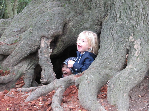 Sunday, 10th, In the hole of the old tree IMG_6575