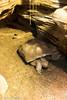 IMG_0698 (10Rosso) Tags: acqua acquario genova pesci pesce mare acquariodigenova aquarium genovaacquarium