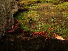 Nature morte (LynxDaemon) Tags: naturemorte vegetation red berries bark moss brown green abstract wallpaper berry