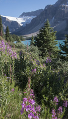 Jasper NP 944 (Gillfoto) Tags: jasper nationalpark canada bc britishcolumbia gillfoto