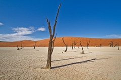 Deadvlei, Namibia (NeSlaB ф.) Tags: neslab nationalgeographic nature africa afrique canon country colors developingcountries desert deadlei deathvalley deadvlei sossusvlei landscape photo reportage travel namib naukluft