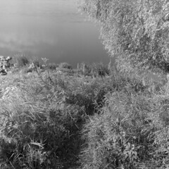 Piece of heaven (Other dreams) Tags: vistula river bank enbankment dike grass grown willow tree water analog square 6x6 bw film rolleiflex handheld