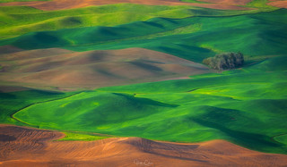 Palouse Soft