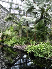 Chicago, Garfield Park Conservatory, Tropical Foliage with Reflection (Mary Warren (9.0+ million views)) Tags: chicago garfieldparkconservatory nature flora plants green leaves foliage tropical pool water reflection garden palmtrees