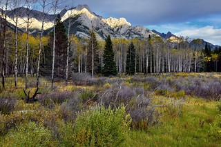 A Meadow and Aspen Trees to Take in the Canadian Rockies (Banff National Park)