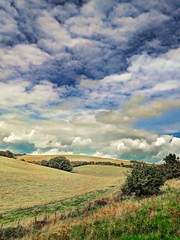 BackTowardTheBeaconNo2 - Copy (iankellybn26dj) Tags: sussex england downs ditchling beacon stanmer photo landscape summer sky walking