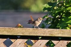 Backyard Stroll - HFF! (Daryll90ca) Tags: fence hff fencedfriday