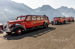 Famous Red Jammer Buses (rebeccalatsonphotography) Tags: jammer red bus montana mt glacier np nationalpark glaciernationalpark icon iconic publictransportation rebeccalatsonphotography canon 5dsr cute humor