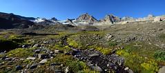 Dove c'era il ghiacciaio di Lavassey (supersky77) Tags: lavassey ghiacciaio glacier granparadiso aosta valledaosta morena moraine forefield alps alpes alpen alpi saxifragaaixoides rhemes valdirhemes