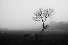 Solitude (JamieHaugh) Tags: clevedon northsomerset england uk outdoors mist fog field trees blackandwhite blackwhite bw nature monochrome gulls solitude britain
