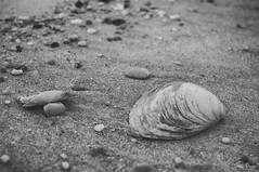 Washed away (Sublime-Focus) Tags: nature rocks summer oyster clams sandy hook beach mussels black white washed away