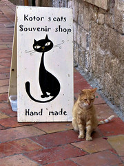 Kotor's cats (Raymonde Contensous) Tags: kotor chat animal insolite humour montenegro cernegore crnagora