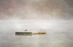 dock in the mist (Hal Halli....happy everything!!) Tags: dock lake pond mist misty calm wallart ontario bancroft dawn dusk solitary peace placid coppercloudsilvernsun magicunicornverybest