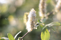 love nature ❤️ (ggcphoto) Tags: nature love macro light fluffy green softness