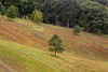 It starts to feel like autumn (Irina1010) Tags: landscape view biltmore trees forest colors autumn fall season nature canon pasture texture curves northcarolina outstandingromanianphotographers ngc