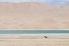 A REMOTE WORLD [Explore] (Claudia Ioan) Tags: ladakh jammukasmir himalayas india asia nikon claudiaioan landscape outdoors lake tsokar