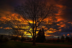 Behind the tree (Kevin_Jeffries) Tags: nikond7100 kevinjeffries silhouette sunset landscape nature nikon nikkor clouds newzealand colorful evening outdoor