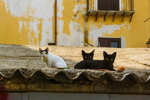 cat228, cat229, cat230, citizens of Palermo
