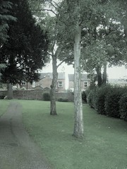 trees 412a (*a*dalton*) Tags: worcester uk trees