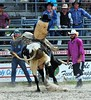 P9020023 (David W. Burrows) Tags: rodeo cowboys cowgirls horses bulls bullriding children girls boys kids boots saddles bullfighters clowns fun